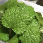 レモンバームの葉